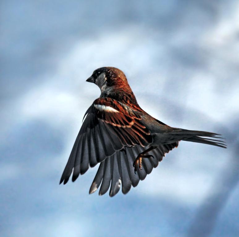 птичка божая